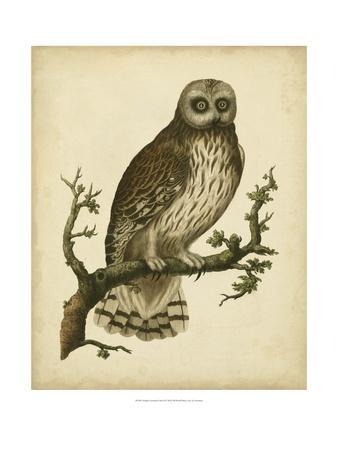 https://imgc.artprintimages.com/img/print/antique-nozeman-owl-ii_u-l-ph68wj0.jpg?p=0