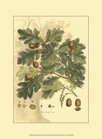 https://imgc.artprintimages.com/img/print/antique-oak-tree_u-l-f1pol20.jpg?p=0