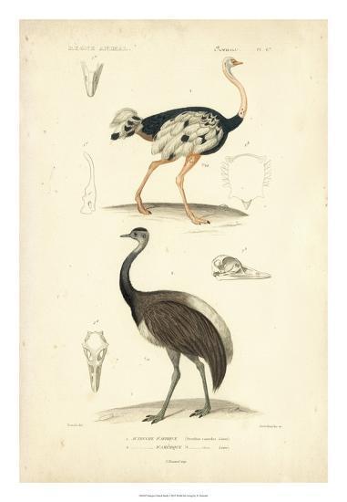 Antique Ostrich Study-N^ Remond-Giclee Print