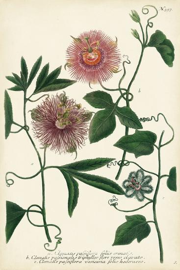 Antique Passion Flower I-Weinmann-Art Print