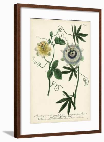 Antique Passion Flower II-Weinmann-Framed Art Print
