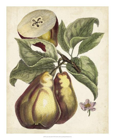 Antique Pear Study I-Unknown-Giclee Print