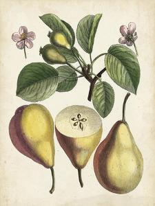 Antique Pear Study II