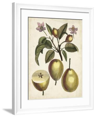 Antique Pear Study III--Framed Art Print