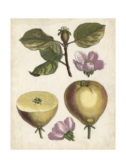 Antique Pear Study IV--Art Print