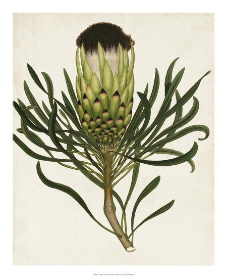 Antique Protea II-Unknown-Giclee Print
