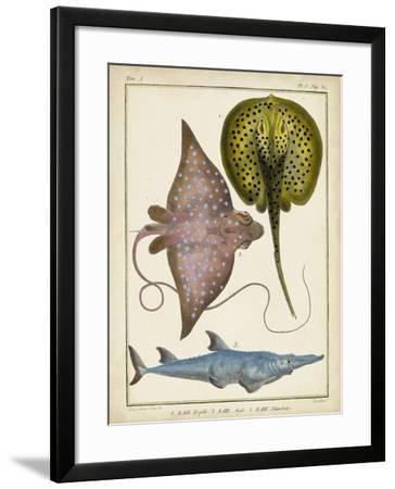 Antique Rays and Fish II-Chevillet-Framed Art Print
