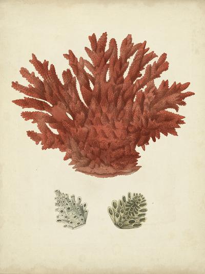Antique Red Coral III-Vision Studio-Art Print