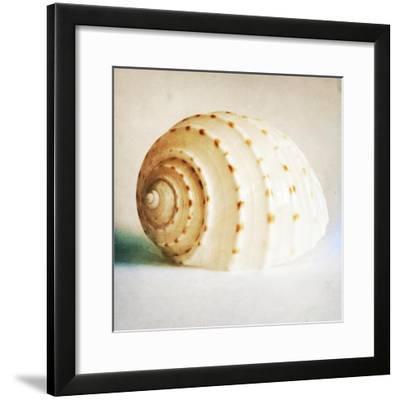 Antique Shell 02-Tom Quartermaine-Framed Giclee Print