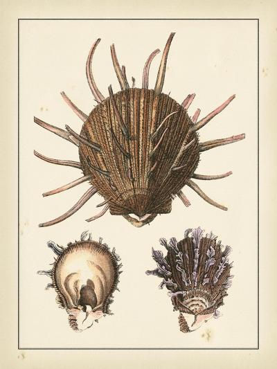Antique Shells I-Denis Diderot-Art Print