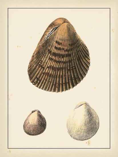 Antique Shells II-Denis Diderot-Art Print
