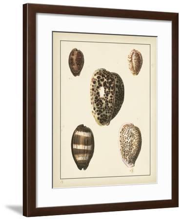 Antique Shells III-Denis Diderot-Framed Art Print