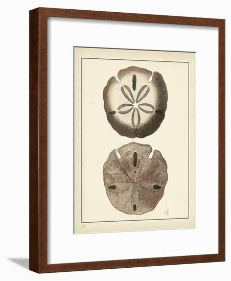 Antique Shells V-Denis Diderot-Framed Art Print