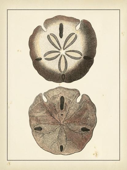 Antique Shells V-Denis Diderot-Art Print