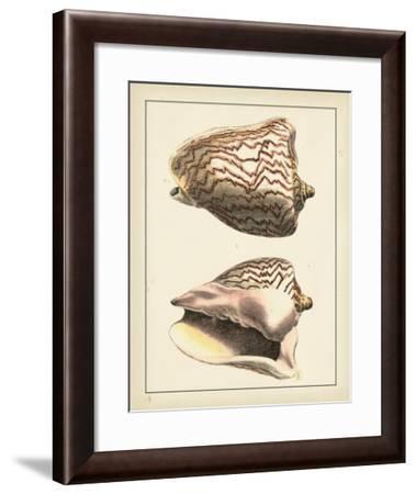 Antique Shells VI-Denis Diderot-Framed Art Print