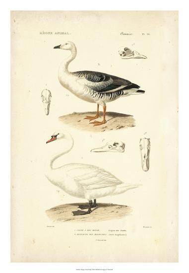 Antique Swan Study-N^ Remond-Giclee Print