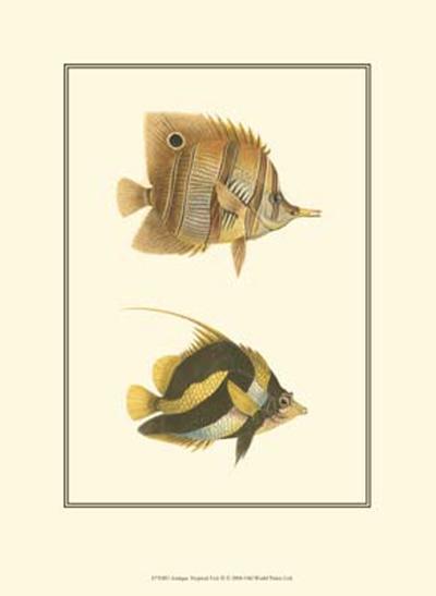 Antique Tropical Fish II--Art Print