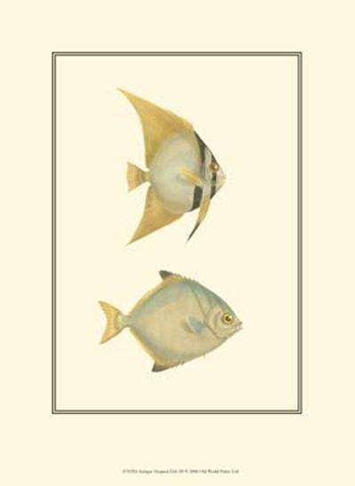 Antique Tropical Fish III--Art Print