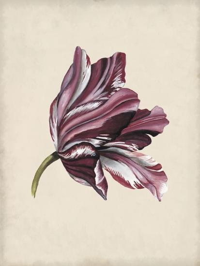 Antique Tulip Study III-Naomi McCavitt-Art Print