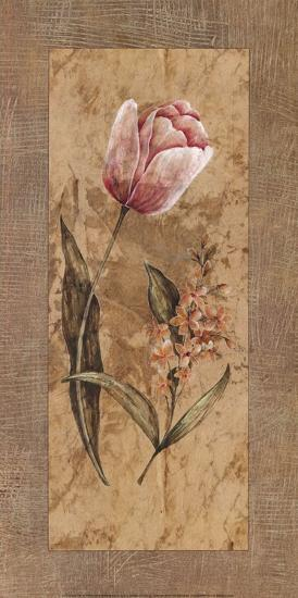 Antique Tulip-Stefania Carlini-Art Print