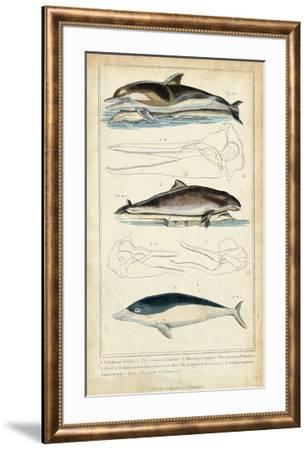 Antique Whale & Dolphin Study II-G. Henderson-Framed Giclee Print