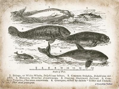 Antique Whales I-Gwendolyn Babbitt-Art Print