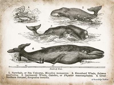 https://imgc.artprintimages.com/img/print/antique-whales-ii_u-l-q19x40l0.jpg?p=0