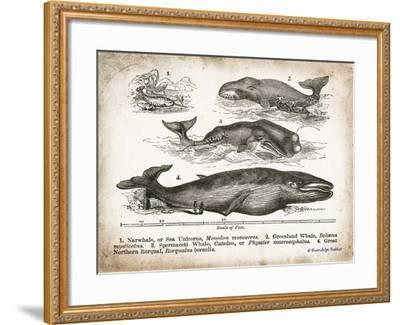 Antique Whales II-Gwendolyn Babbitt-Framed Art Print