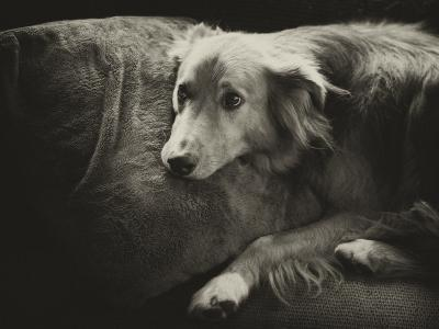 Antiqued Black and White Portrait of a Pet Dog-Amy & Al White & Petteway-Photographic Print