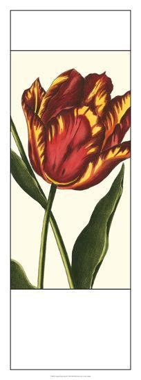 Antiqued Tulip Panel II--Giclee Print