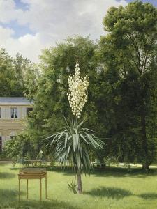 Un Yucca gloriosa dans le parc de Neuilly by Antoine Chazal