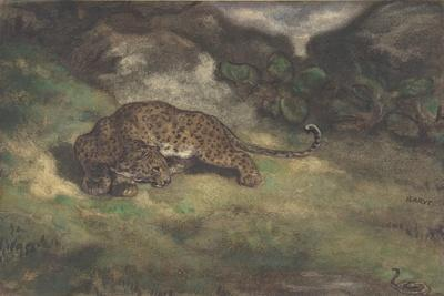 Leopard and Serpent, 1810–75