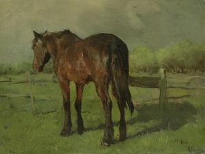 An Old Horse Standing in a Pasture with a Fence by Anton Mauve
