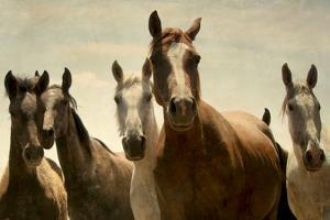 Five Wild Horses Posing for Photo by antonio arcos aka fotonstudio photography