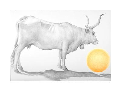 Mucca in Maremma