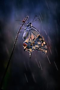 Under the Summer Rain by Antonio Grambone
