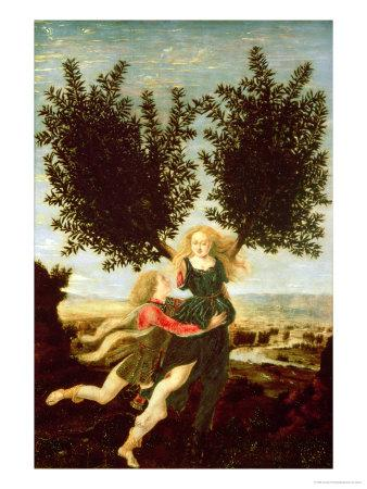 Daphne and Apollo, c.1470-80