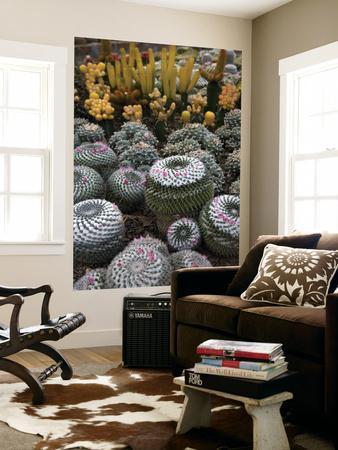 Cactus Garden in the Pine View Nursery