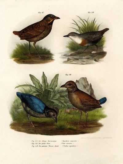 Antpitta, 1864--Giclee Print