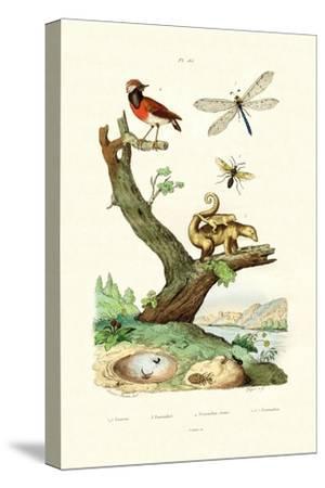 Ants, 1833-39
