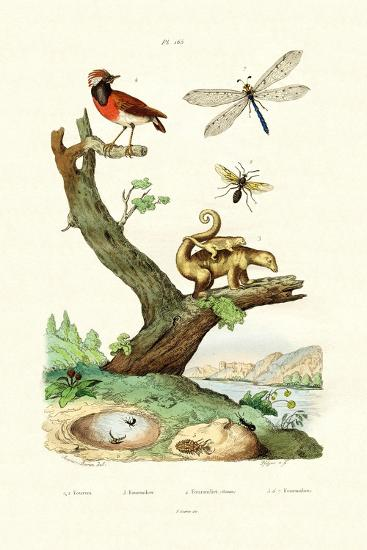 Ants, 1833-39--Giclee Print