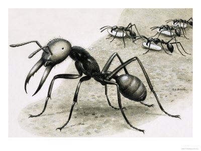 https://imgc.artprintimages.com/img/print/ants_u-l-p569ik0.jpg?p=0