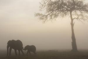 African Elephant Mother and Baby at Dawn by Anup Shah