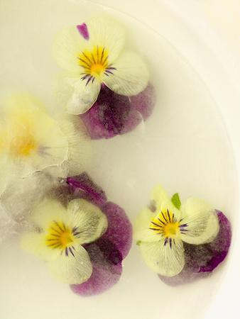 Bowl Filled with Frozen Water and Little Violets