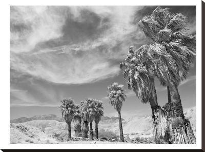 Anza Borrego #2-Murray Bolesta-Stretched Canvas Print