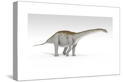 Apatosaurus Dinosaur, White Background