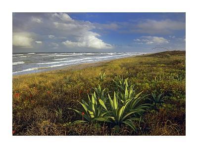 Apollo Beach at Canaveral National Seashore, Florida-Tim Fitzharris-Art Print