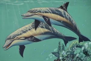 GP-Common Dolphins by Apollo