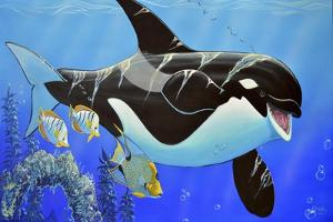 Orca Baby by Apollo