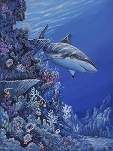 Shark Reef by Apollo